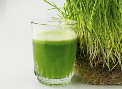 Chlorophyllhaltiges Weizengras für deinen Slow Juicer